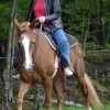 Scenic Guided Trail Rides Through The Pocono Woods Riding