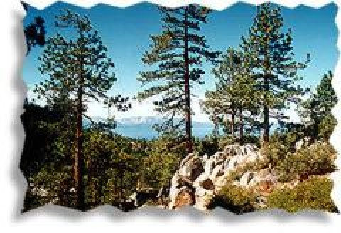 Photo #2 - South Lake Tahoe Condos, Cabins & Homes