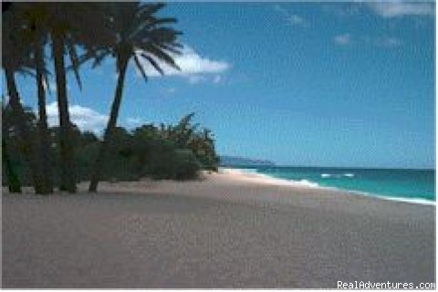 Sunset Beach 1-Bed/1-Bath Vacation Rental Vacation Rentals Hawaii