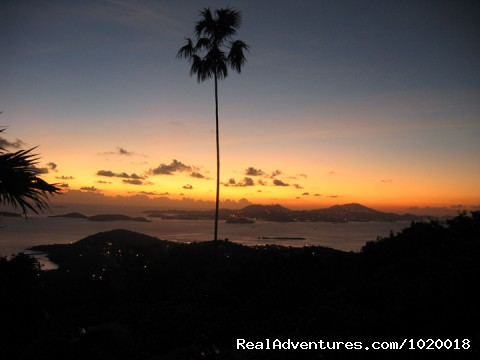 Lone Palm in the Sunset - Cloud Nine, Panoramic Views of Oceans and Islands