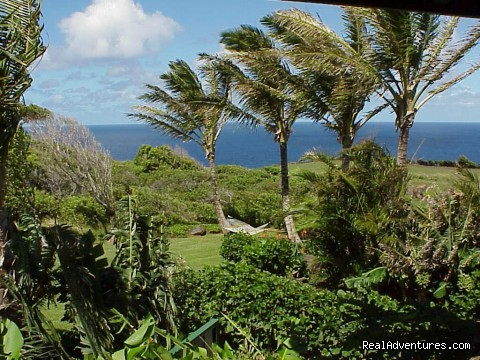 Coconuts and a cool trade wind ... (#24 of 26) - Huelo Point Lookout...a romantic B&B retreat
