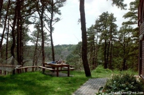 Picnica table and hammock - The Laurel, a 2BR and or 1BR Guest House