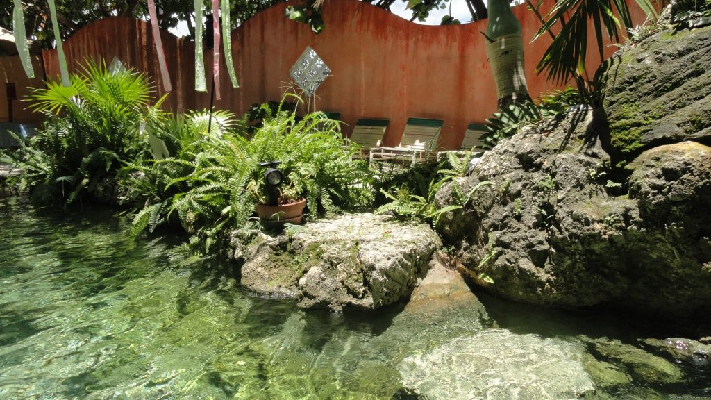 Tropical water garden | Image #10/12 | Everglades Hostel & Tours