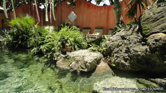 Tropical water garden - Everglades Hostel & Tours