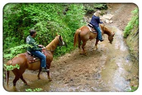 Crossing a stream - Southern Cross Guest Ranch