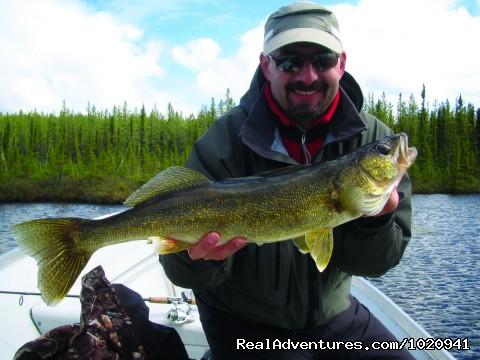 Spence Lake Walleye (#16 of 26) - Minor Bay Lodge & Outposts, Wollaston Lake, Saskat