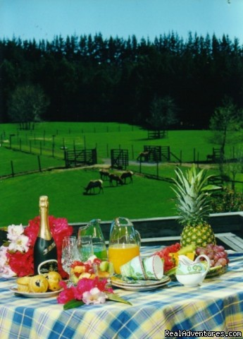 Alfresco Breakfast - Clover Downs Estate - Rotorua