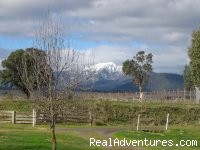 Mt Buller in August from the cottage - Romantic Buttercup Cottage & Private Apartment