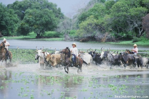 Los Llanos - Natoura Travel &  Adventure tours in Venezuela