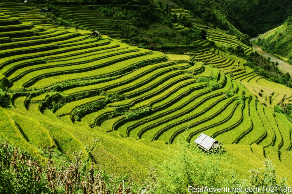 Bali's extensive rice terraces, Indonesia | Image #4/8 | Asian Trails
