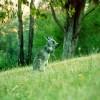 Private Wildlife Sanctuary