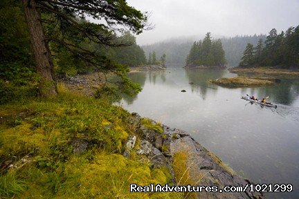 Johnstone Strait - pristine wilderness | Image #22/25 | Sea Kayak Vacations & Whale Adventures in Baja/BC