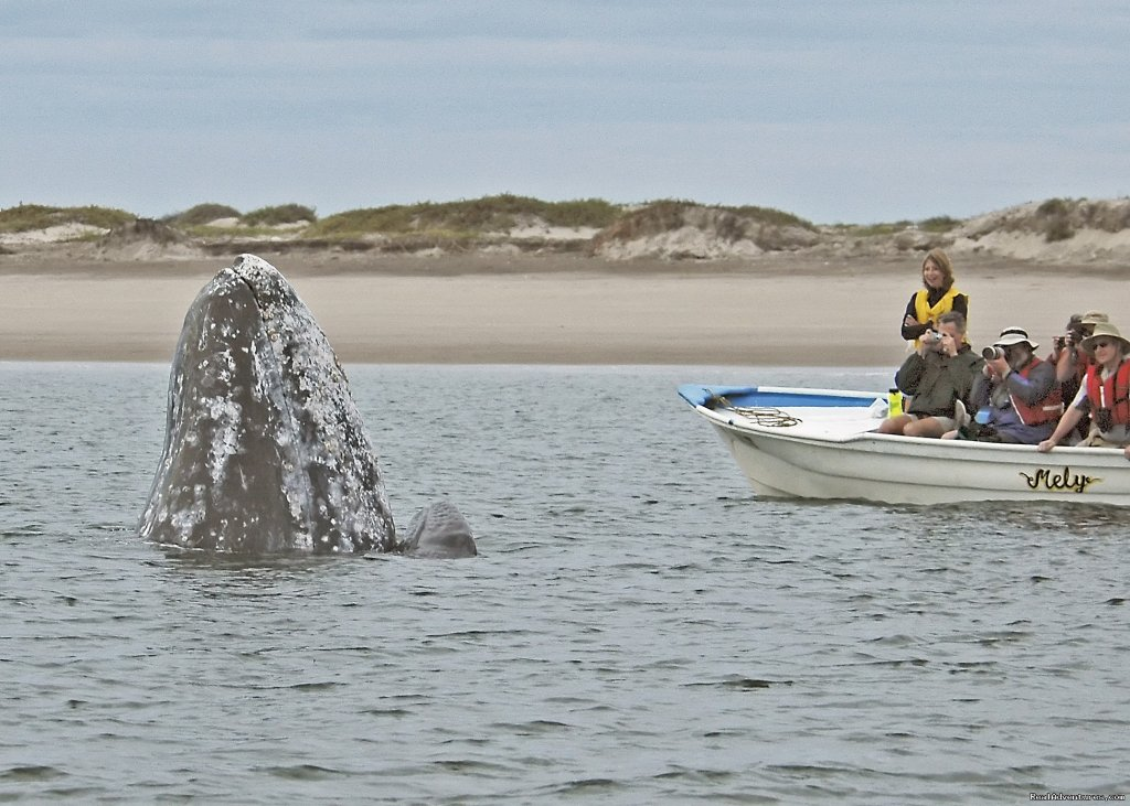 Gray Whale Mom and Baby Watching Humans | Image #10/25 | Sea Kayak Vacations & Whale Adventures in Baja/BC