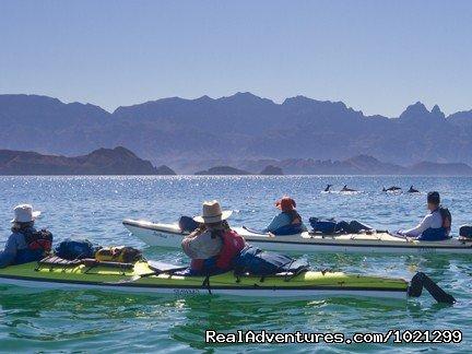 Dolphins swim by our kayaks | Image #4/25 | Sea Kayak Vacations & Whale Adventures in Baja/BC