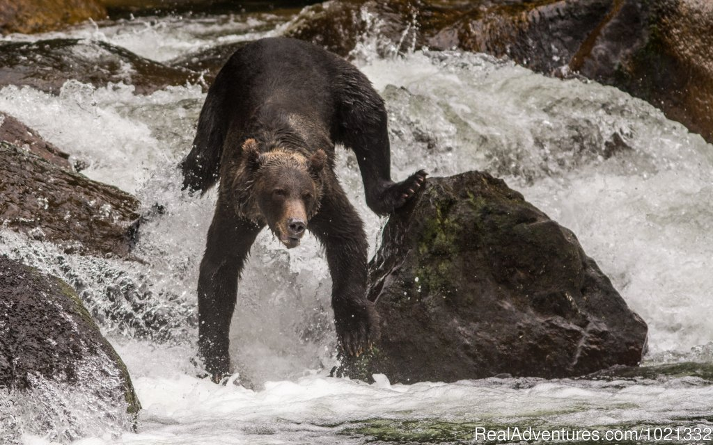 Fishing the River | Image #2/15 | Grizzly Bear & Whale Tours