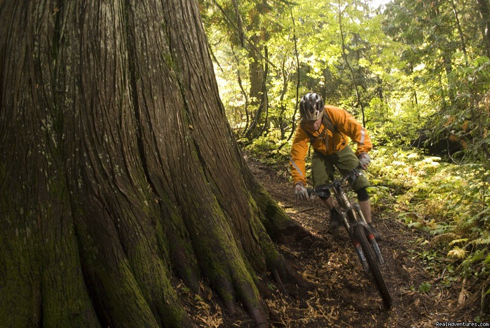 BC old-growth | Image #23/25 | Award-Winning Singletrack Adventures