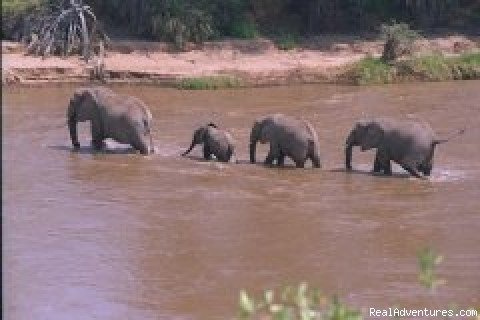 Elephant Crossing | Image #3/4 | African Horizons - Safaris and Tours