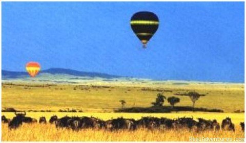 Balloon & Wildebeest | Image #4/4 | African Horizons - Safaris and Tours