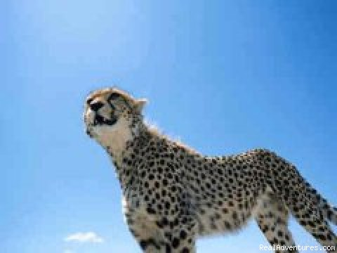 African Horizons - Safaris and Tours