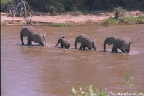 Elephant Crossing - African Horizons - Safaris and Tours