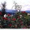 A Cascade View Bed & Breakfast