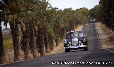 Touring along Seppeltsfield Road - Barossa private wine touring in a 1962 Daimler