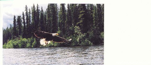Feed Eagles from your boat - Finger Lake Wilderness Resort-GETAWAY,Relax&Unwind