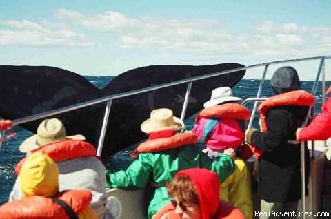 Whalewatching in Peninsula Valdes - Patagonia Travel Adventures