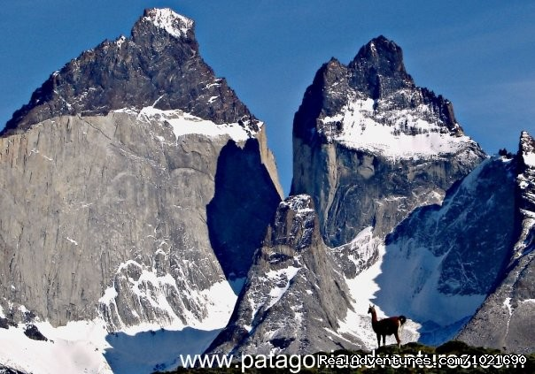 Guanaco , Torres del Paine Nat Park - Patagonia Travel Adventures