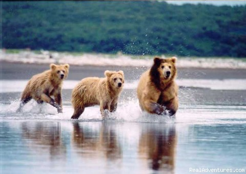 Hallo Bay Bears - Alaska Bear Adventures