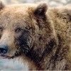 Alaska Bear Adventures Homer, Alaska Wildlife & Safari Tours