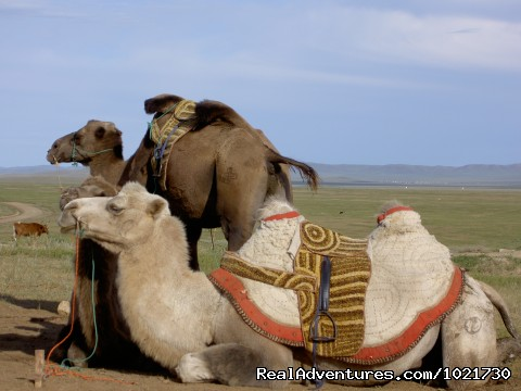 Mongolia Bactrian Camel Safari Samar Magic Tours - Mongolia Samar Magic Tours