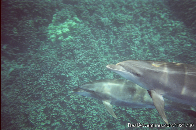 Bottlenose Pair - Awakening In Paradise Retreats