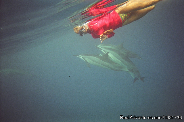Dolphin Play - Awakening In Paradise Retreats