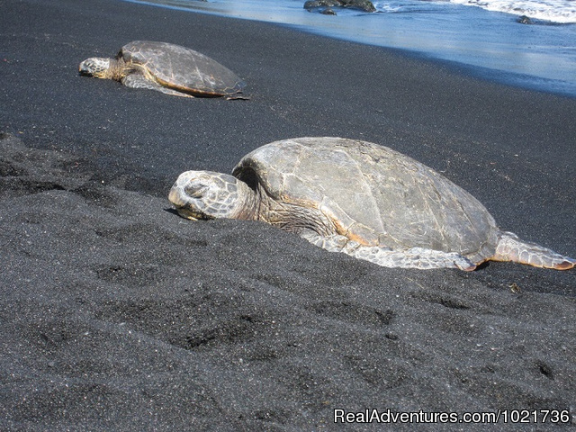 Sleeping Turtles - Awakening In Paradise Retreats