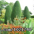 Sissinghurst Garden, Kent (#7 of 8) - England garden tour with Chelsea Flower Show.