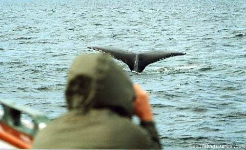 - Alaska Yacht Charters aboard Discovery
