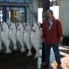 Alaska Fishing Adventures at Krog's Kamp Homer Halibut