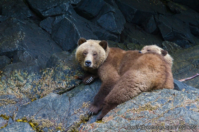 Grizzlies in Knight Inlet (included in trip) - Small Group Rockies & Vancouver Island Vacations
