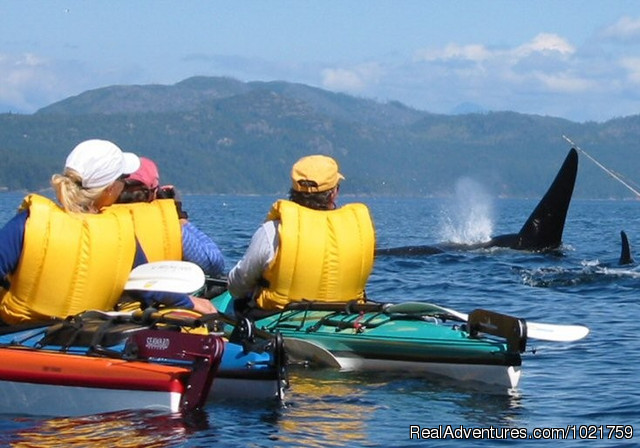 Paws and Jaws Wildlife Tour - Small Group Rockies & Vancouver Island Vacations