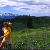 Hike an alpine meadow