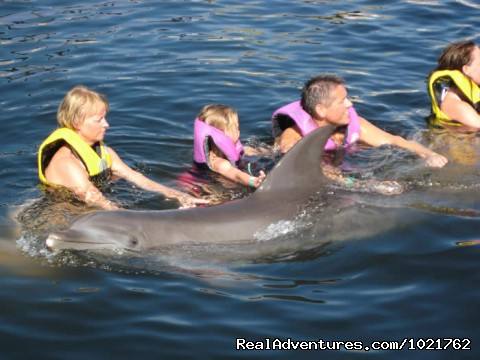 - Swim with Dolphins at Dolphin World