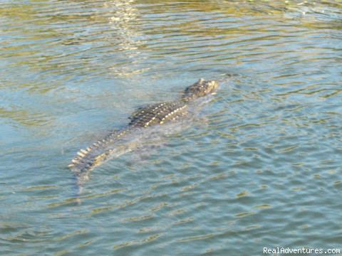 Cape York Croc - Australian Wild Escapes