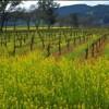 Visit Beautiful Wineries