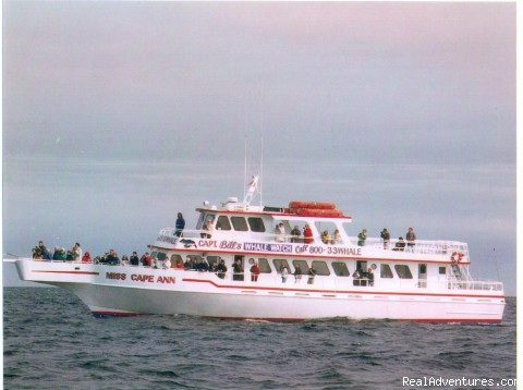 Photo #6 - Capt. Bill & Sons Whale Watch