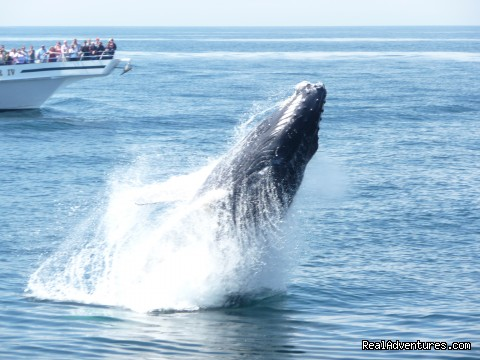 - Capt. Bill & Sons Whale Watch