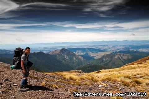 Mt Arthur - Hiking New Zealand