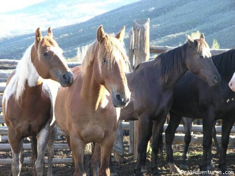 Saddle Up - Box R Ranch : A True West Experience