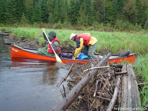 Jump the beaver dam | Image #3/9 | POW-WOW Wilderness Trips