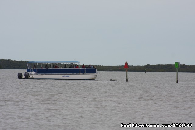 Dolphins in the bay - Everglades Day Safari